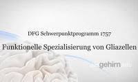 Video: Neurobiologie der Gliazellen anschaulich erklärt