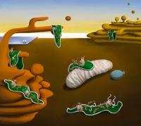 Neue Zell-Funktionalitäten in dünnen Schichten entwickeln