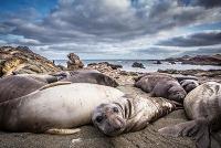 Elf Robbenarten sind Ausrottung knapp entgangen