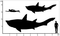 Riesiger Teenagerhai aus der Urzeit