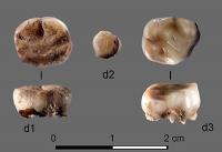 Uralte Zähne führen zur Entdeckung einer Bevölkerungsgruppe