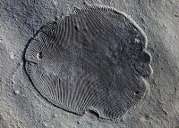 558 Mio. Jahre alte Fossilien anhand der Lipidmoleküle als älteste bekannte Tiere identifiziert