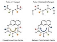 Neue Wege für den Protonentransport in Wasser oder Methanol