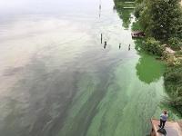 Cyanobakterien im Wasser und an Land als Quelle für Methan identifiziert