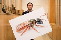 Mit den Augen der Biene: Zoologe entwickelt Verfahren zur Verbesserung dunkler Bilder
