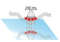 Neue Methode verpasst dem Mikroskop einen Auflösungsschub