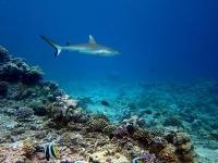 Was leisten Meeresschutzgebiete für Korallenriffe?