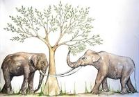 Elefant überlebt Stegodon