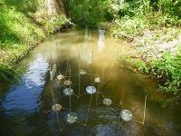 Flussfahrt mit Milbe