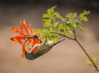 Tiere und Pflanzen dirigieren ihr Zusammenleben gemeinsam