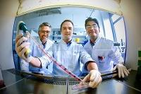 Protein beeinflusst Regeneration von Gefäßzellen