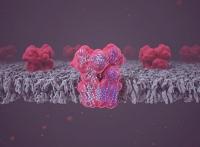 Neue Mikroskopie-Technologie offenbart Struktur und Funktion eines zentralen Stoffwechselenzyms