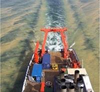 Verschwenderische Blaualgen: Überraschendes Angebot an Aminosäuren für Zooplankton