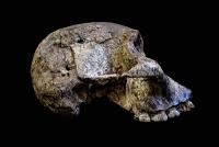 Mutter-Kind-Bindung vor 2 Millionen Jahren
