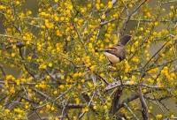 Vogelgezwitscher besteht aus kombinierten Lauten