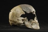 Bisher ältestes Genom moderner Menschen rekonstruiert
