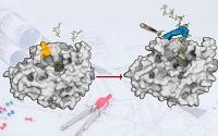 Neue Technik fürs Enzym-Design