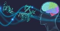 Parkinson-Proteine haben molekulare Leibgarde