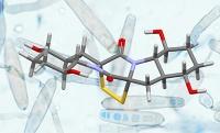 Eine neue Strategie für die Synthese komplexer Naturstoffe