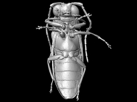 Käfer aus der Kreidezeit rekonstruiert