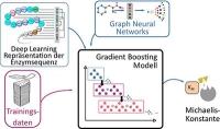 Bioinformatik: KI hilft, Enzymtätigkeit zu quantifizieren