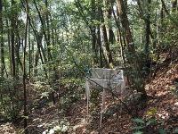 Artenreiche Wälder kompensieren die Klimabelastungen besser