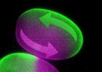 FLUCS - Interaktive Mikroskopie für Biologen