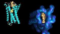 Molekulare Wechselwirkungen messen