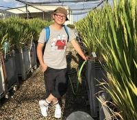 Risiko oder Chance für den Reisanbau? Forscher entdecken neue Arsenverbindungen in Reisfeldern