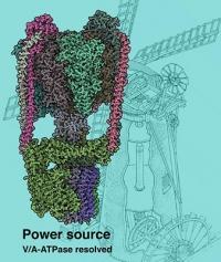 Struktur der Protein-Nanoturbine entschlüsselt