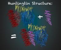 Die Entschlüsselung der Struktur des Huntington Proteins