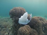 Plastik in Ozeanen: Schwimmende Müllschlucker sind nicht die Lösung