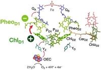 Neue Erkenntnisse zur Energieumwandlung bei der Photosynthese: Quantenchemische Berechnungen beleuchten angeregte Zustände der Chlorophyllmoleküle
