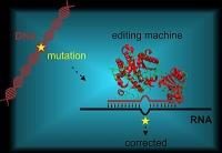 Gezielte RNA-Editierung als neue Alternative zur Genschere