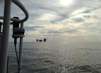 Klein, aber vielseitig: Schlüsselorganismen im marinen Stickstoffkreislauf nutzen Cyanat und Harnstoff