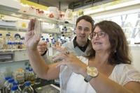 Keimfreie Bruteier: Neue Alternative zum gängigen Formaldehyd