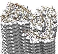 Science: Schärfstes Bild von Alzheimer-Fibrillen zeigt bislang unbekannte Details