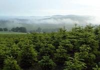 Ihr Vögelein, kommet: Weihnachtsbaumkulturen für gefährdete Arten wertvoll