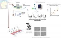 SARS-CoV-2-Viren im Abwasser: COVID-19 Überwachung und potenzielle Frühwarnung