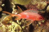 Nachtaktive Fische haben kleinere Gehirne