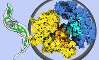 Eine ganz besondere Proteinmaschinerie
