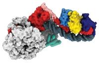 Chromatinstruktur: Packen und entpacken