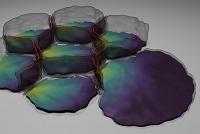 Biophysik: Zellen in Bewegung