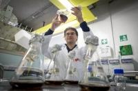 Enzyme bei der Arbeit: Aufspaltung widerspenstiger Cellulose