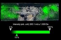 Früher trug man bunt: Chemiker erforschen Jahrtausende alte Stoffe