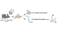 Das Proteom aktiver Nervenzellen