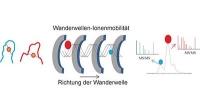 Wanderwellen-Ionenmobilitäts-Massenspektrometrie klärt Goldfinger-Strukturen auf