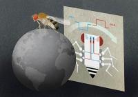 Drei Nervenzellen reichen, um eine Fliege zu steuern
