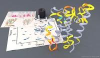 Erste dynamische Bilder zeigen Funktion von Rhomboid-Proteasen