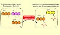 Wirkstoff-Vielfalt aus Bakterien